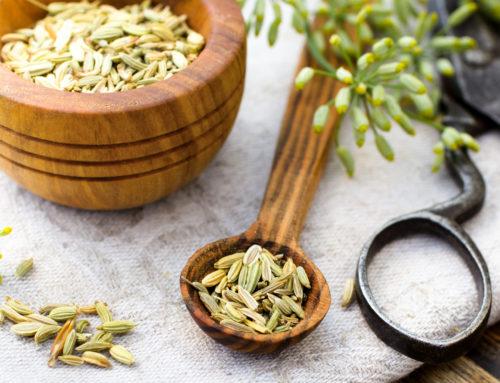Семена фенхеля: полезные свойства в KLETONIKA