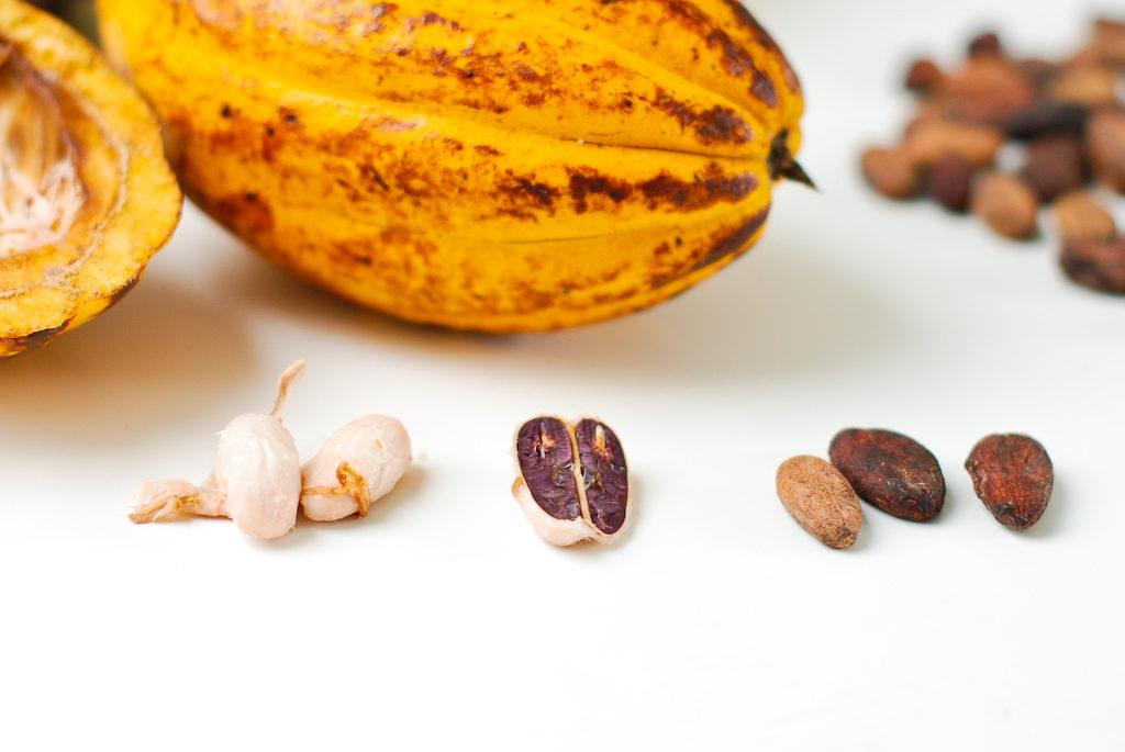 Какао бобы Форастеро: польза в составе комплекса