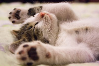 Как влияет недосыпание на здоровье Функции, стадии, правила здорового сна